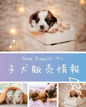 dog-wan