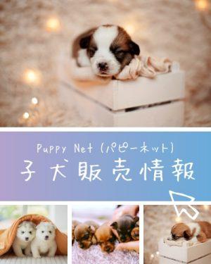 子犬販売情報